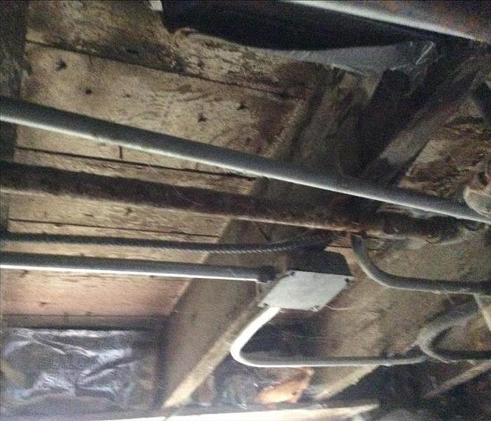 Ceiling Mold in Chicago, IL Before
