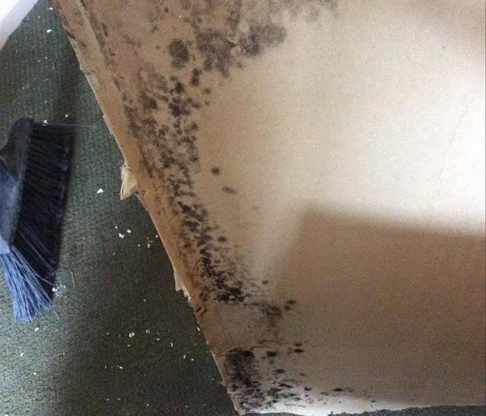 Mold Remediation Is Hidden Mold Lurking?