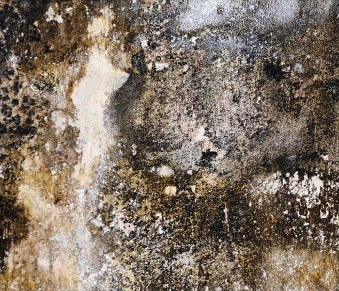 Mold Remediation Conditions In Chicago Might Be Right For Mold